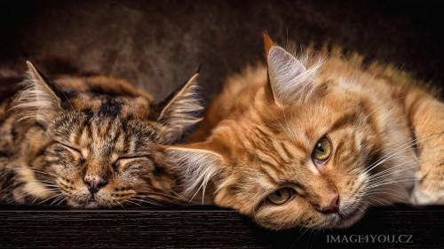 Cats-03-091.jpg