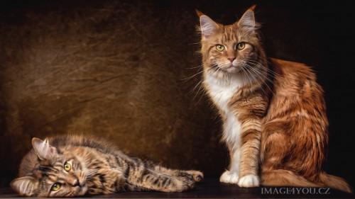 Cats-03-092.jpg