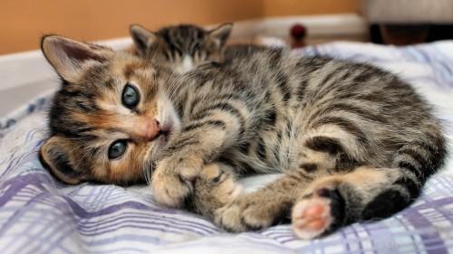 Cats-04-002.jpg