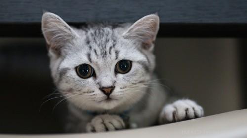 Cats-04-063.jpg