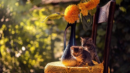 Cats-05-073.jpg