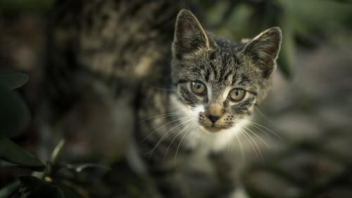 Cats-05-076.jpg