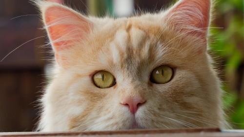 Cats-05-095.jpg