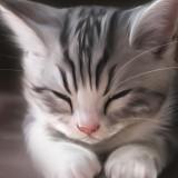 Cats-06-002