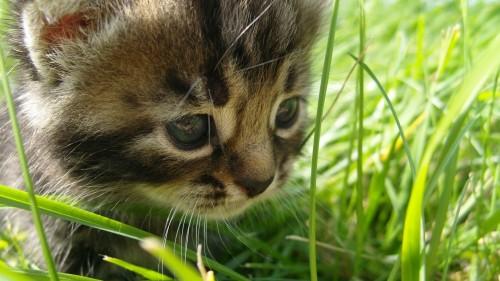 Cats-06-003.jpg