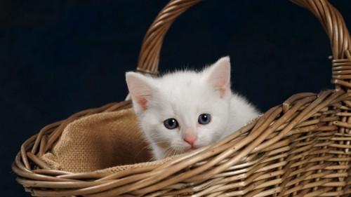 Cats-06-005.jpg