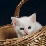 Cats-06-005