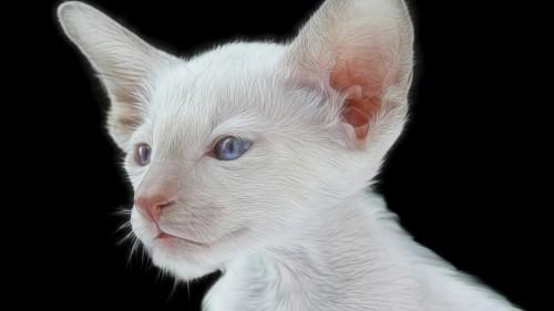 Cats-06-006.jpg