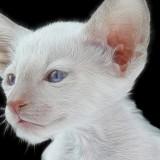 Cats-06-006