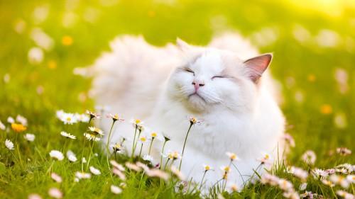 Cats-06-065.jpg