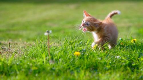 Cats-06-066.jpg