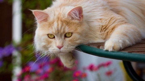 Cats-06-067.jpg