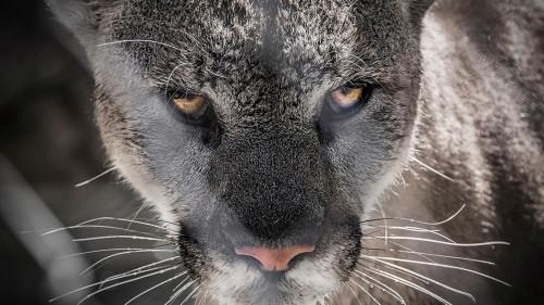 Beast-Cats-04-027.jpg