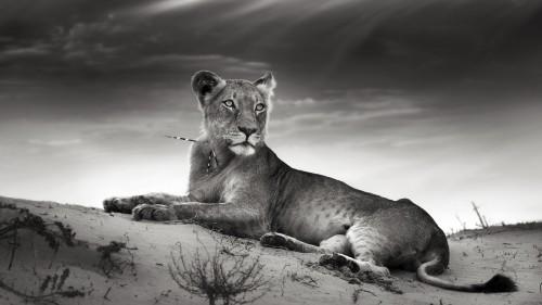 Beast-Cats-04-033.jpg