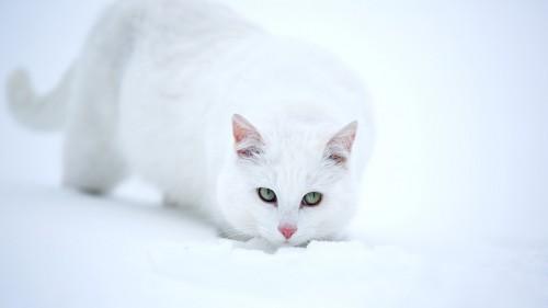 Cats-07-001.jpg