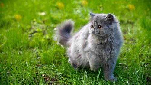 Cats-07-070.jpg