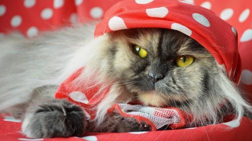 Cats-07-075.jpg