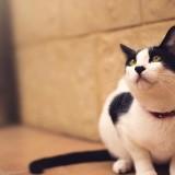 Cats-07-079