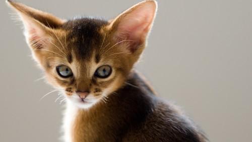 Cats-07-082.jpg