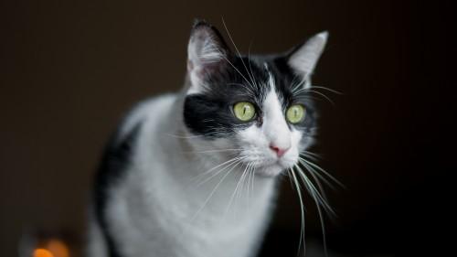 Cats-07-083.jpg
