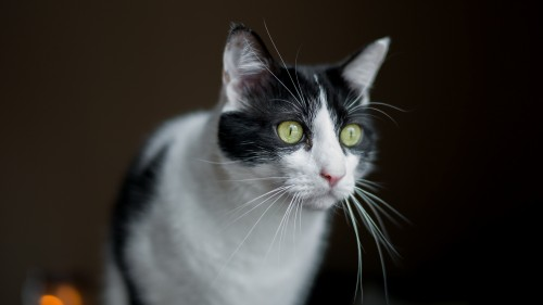 Cats #07 (083)