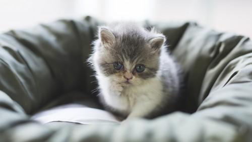 Cats-07-084.jpg