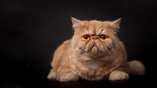 Cats-07-085.jpg