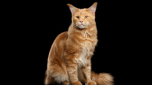 Cats-07-087.jpg