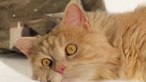 Cats-07-088.jpg