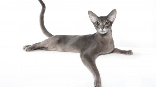 Cats-08-001.jpg