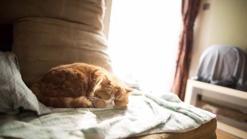 Cats-08-013.jpg