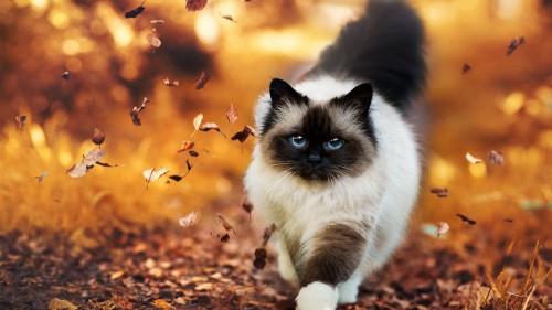Cats-08-025.jpg