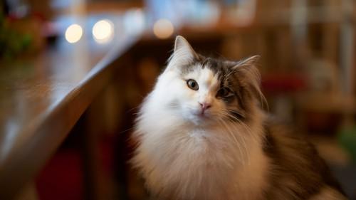 Cats-08-028.jpg