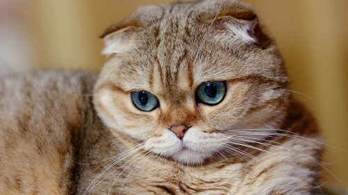 Cats-09-02.jpg