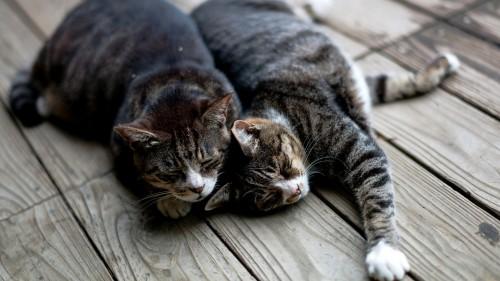 Cats-09-77.jpg