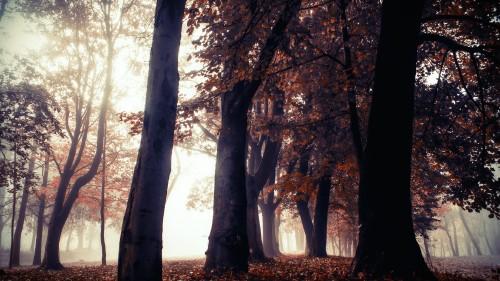 Nature-Ultra-HD-4K-Wallpapers-01.jpg