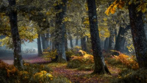 Zlaty-a-smutny-podzim---image4you.cz-109.jpg