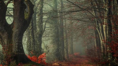Zlaty-a-smutny-podzim---image4you.cz-110.jpg