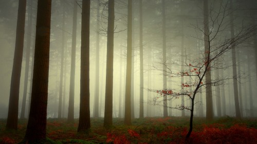 Zlaty-a-smutny-podzim---image4you.cz-112.jpg