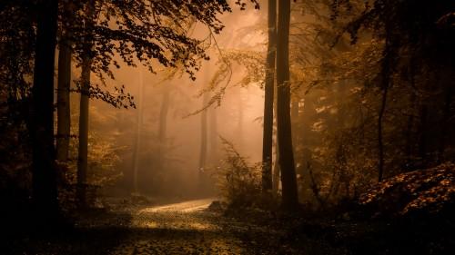 Zlaty-a-smutny-podzim---image4you.cz-114.jpg
