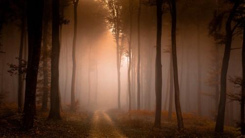 Zlaty-a-smutny-podzim---image4you.cz-115.jpg