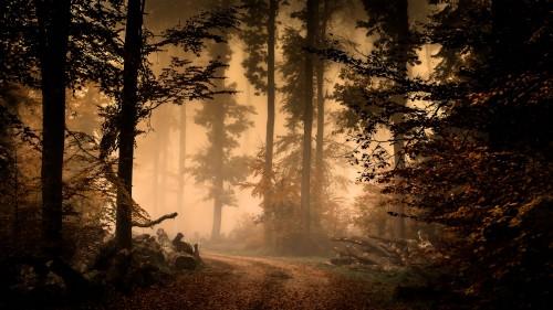Zlaty-a-smutny-podzim---image4you.cz-116.jpg