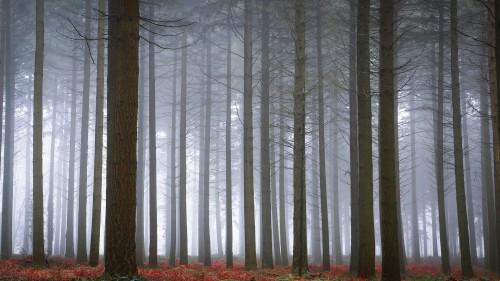 Zlaty-a-smutny-podzim---image4you.cz-118.jpg