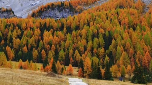 Zlaty-a-smutny-podzim---image4you.cz-123.jpg