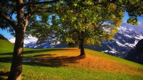 Zlaty-a-smutny-podzim---image4you.cz-126.jpg