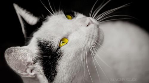 001_cats_60.jpg