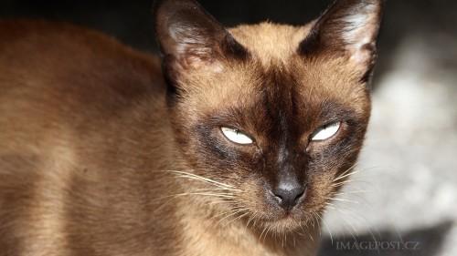 Cats-01-003.jpg