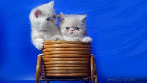 Cats-01-006.jpg