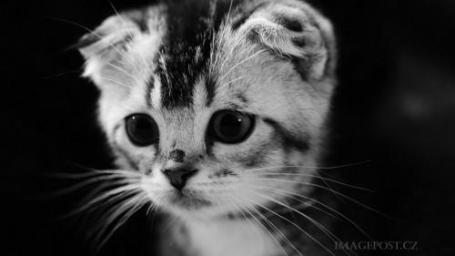 Cats-01-008.jpg