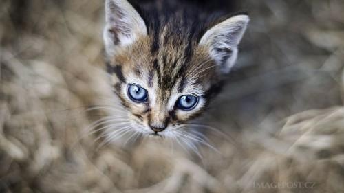 Cats-01-009.jpg
